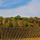 Herbstlandschaft Weinberge