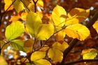 Herbstlaub 04