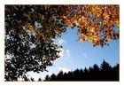 *Herbstlaub (3)*