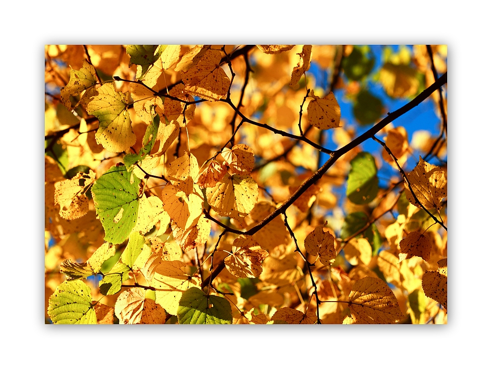 *Herbstlaub*