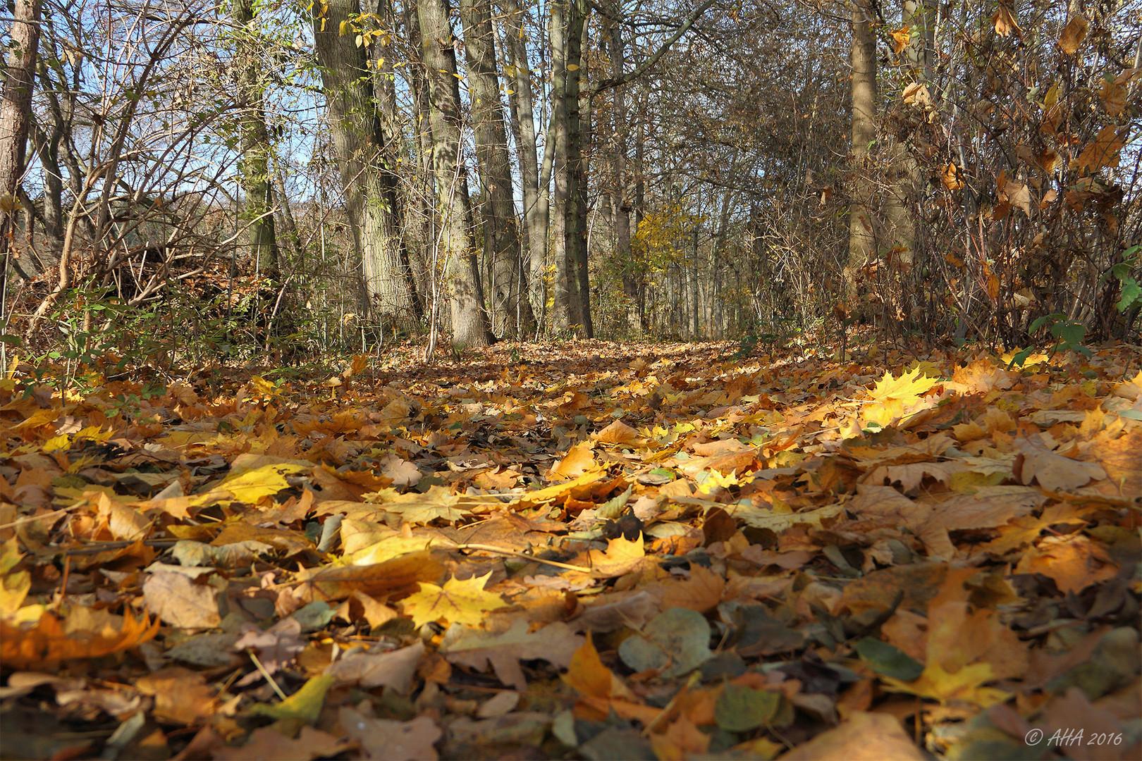 Analfick Im Herbstlaub
