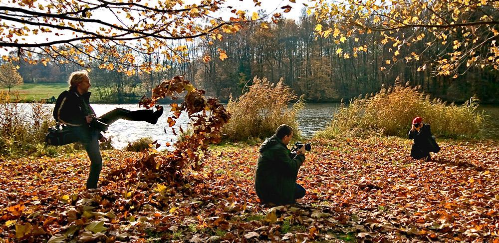 Herbstlaub für die Fotografen!