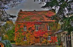 Herbstlaub - HDR