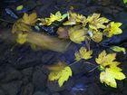 Herbstlaub im Bach