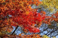 Herbstlaub im Eikando Tempel