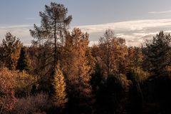 Herbstlaub im Morgenlicht