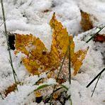 Herbstlaub im Schnee
