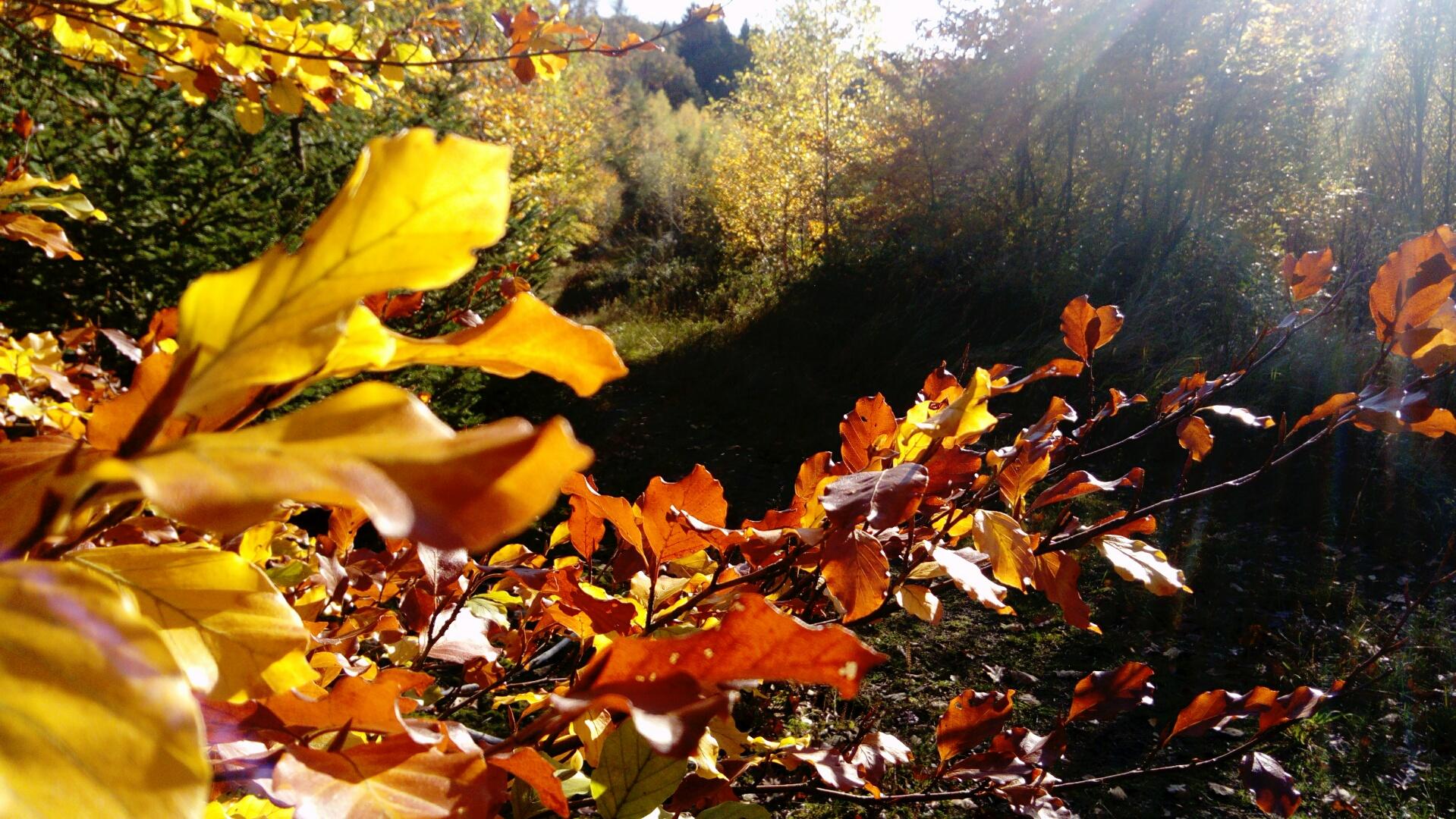 Herbstlaub in Licht und Schatten