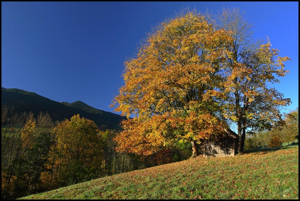 ~ Herbstlaub mit Schäune ~