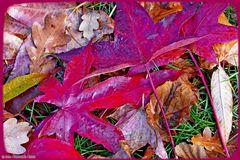 Herbstlaub-nur vom Wind so geordnet