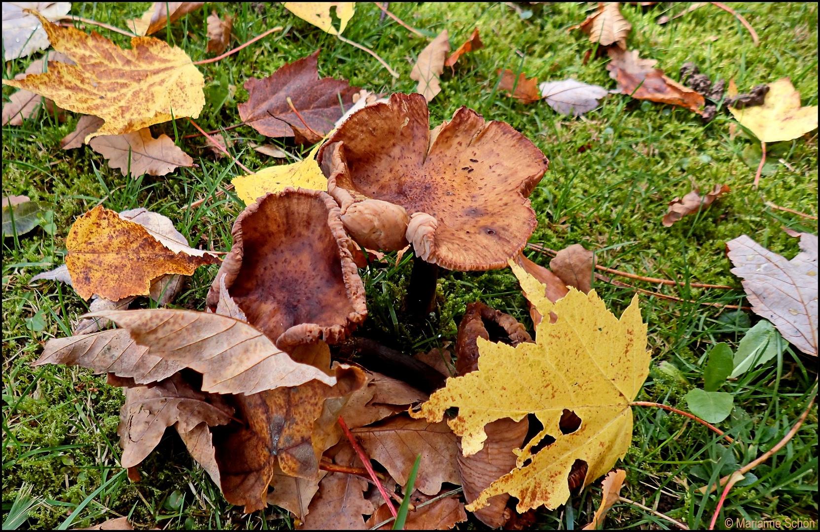 Herbstlaub... und was noch...