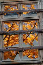 Herbstlaub vor dem Fenster