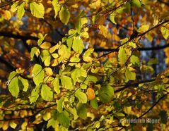 Herbstlaub_2