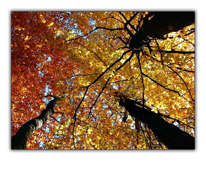 Herbstlaubdach