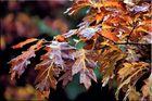 ** Herbstlaubschön **