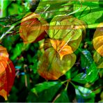 * Herbstleuchten *