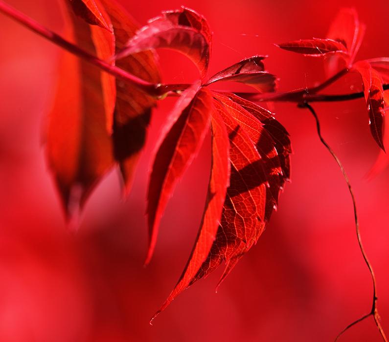 Herbst.leuchten...!