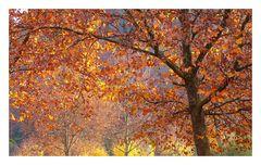 Herbstleuchten (2)