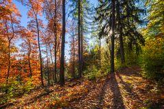 Herbstleuchten 2