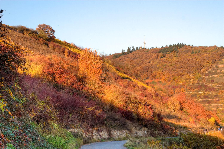 Herbstleuchten 2011..