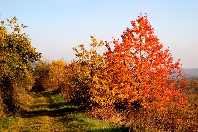 Herbstleuchten 2011