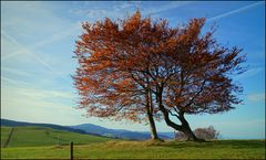 Herbstleuchten (3)