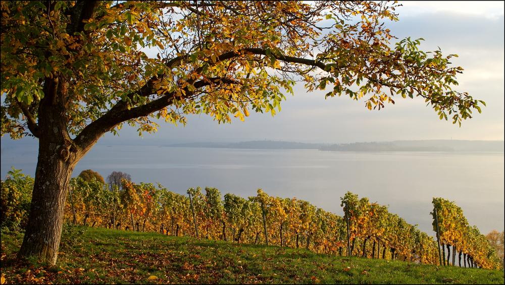 Herbstleuchten (4)