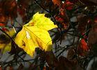 """""""Herbstleuchten"""""""