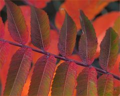 ...Herbstleuchten...