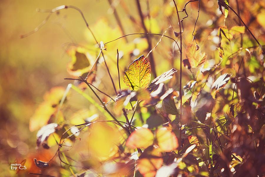 *** HerbstLEUCHTEN ... ***