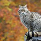 Herbstleuchten ...