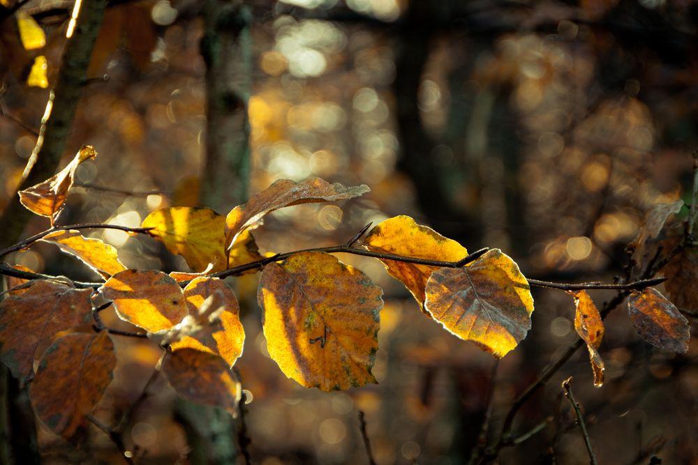 Herbstleuchten.