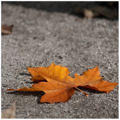 Herbstleuchten (F11)