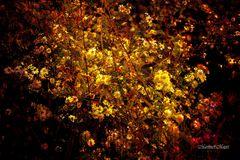 @Herbstleuchten