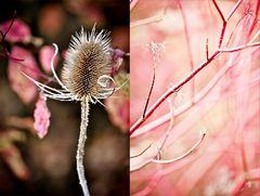 Herbstleuchten II