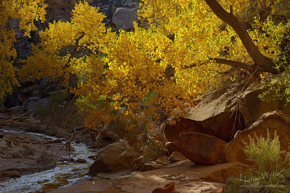Herbstleuchten im Canyon