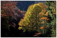 Herbstleuchten im Schwarz(en)wald
