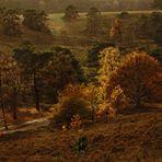 Herbstleuchten in der Brunssumer Heide
