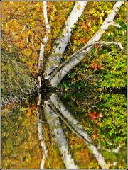 Herbstlich #1