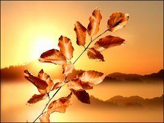 Herbstlich.....