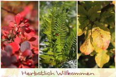Herbstlich...