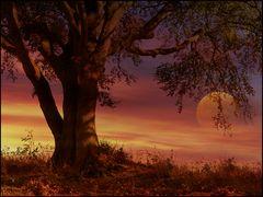 Herbstlich..