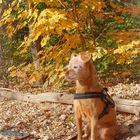 Herbstlich Gelb
