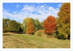 Herbstlich geschmückte Bäume im Park