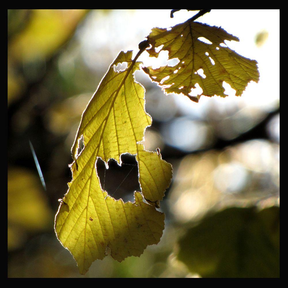 Herbstlich Herbstloch