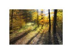 Herbstlich I