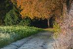 Herbstlich-winterlicher Weg
