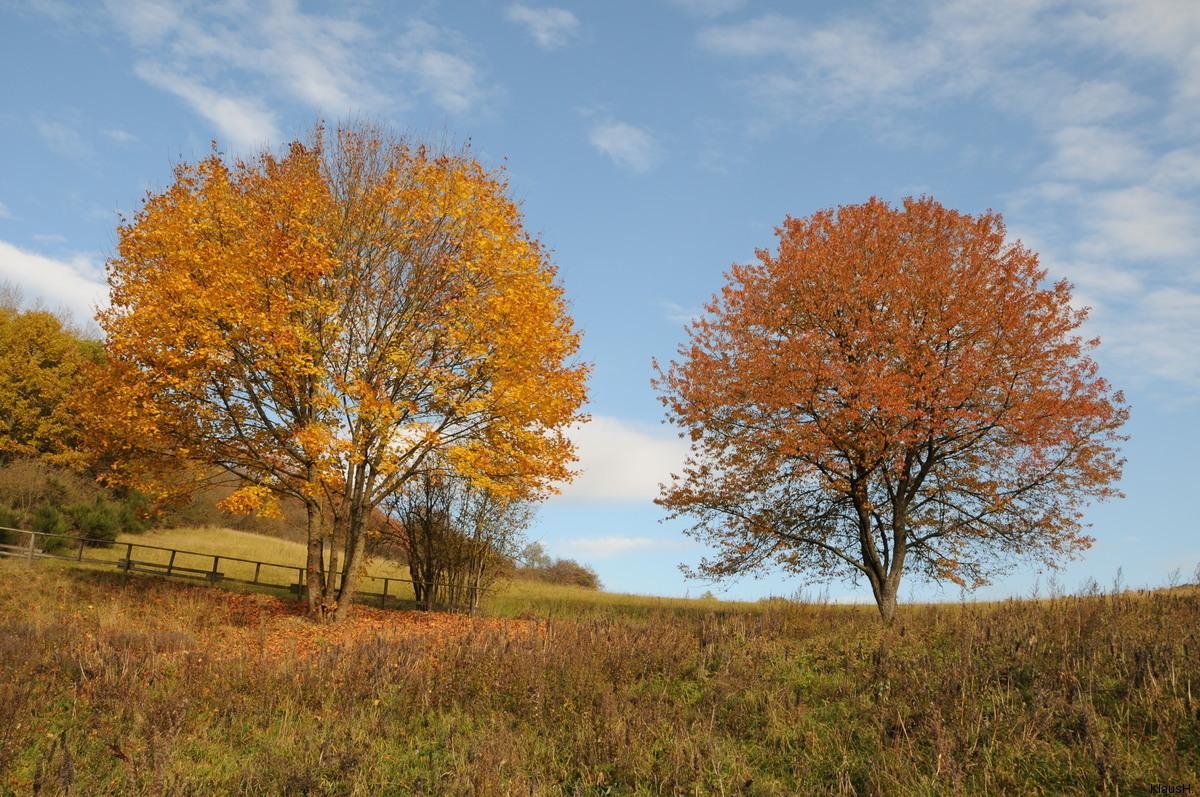 Herbstliche Bäume in der Eifel oberhalb...