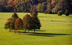 Herbstliche Baumgruppe im Englischen Garten