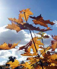 Herbstliche Blätter mit Insekt